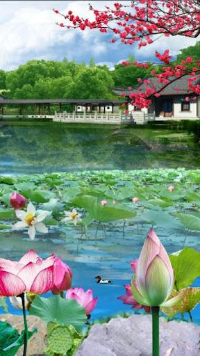 Lotus Pond 3D Live Wallpaper