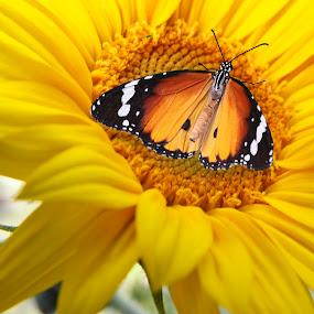 Flower & Butterfly by Deleted Deleted - Flowers Single Flower