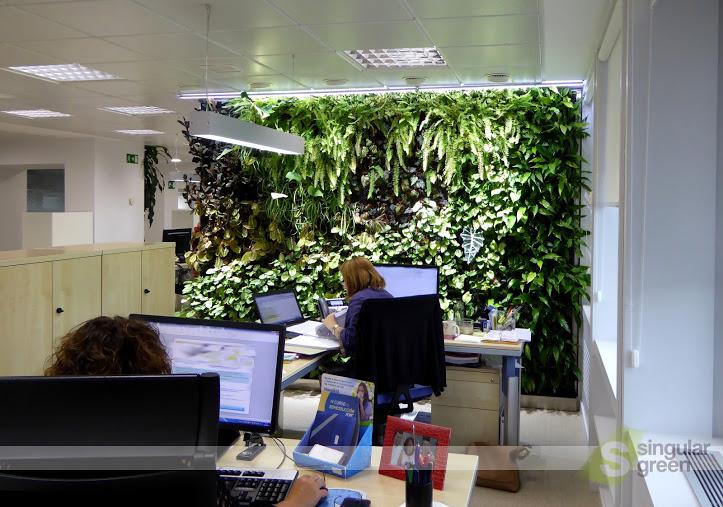 Conjunto de jardines verticales de interior para oficinas for Plantas de interior madrid