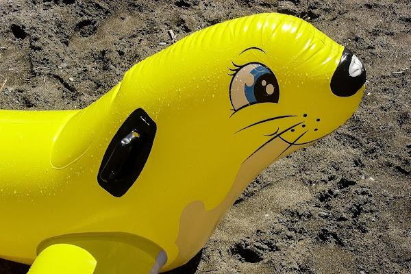 La foca di acquario