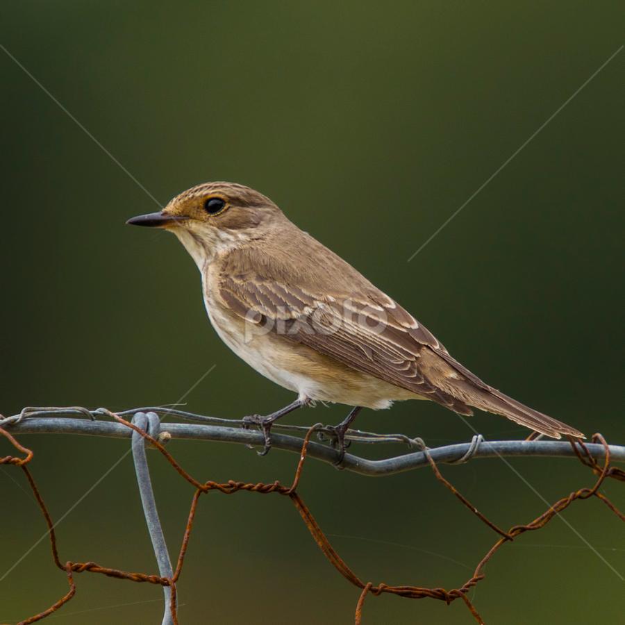 ........ by Emanuel Fernandes - Animals Birds
