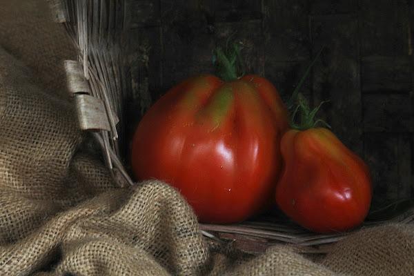 Il raccolto. di Naldina Fornasari