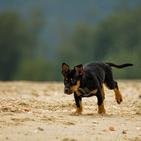 by Charliemagne Unggay - Animals - Dogs Running