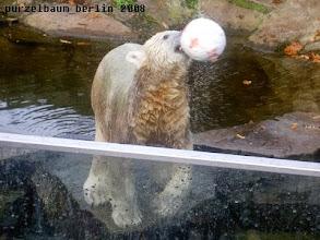 Photo: Knut ist bereit zum Abwurf :-)