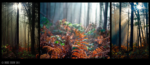 Photo: Good morning Googlers.  This is a triptych from a local forest called Delemere, I don't do many and I do very little framing on images as I think it takes a little away from it but I think it works when combining images.  This was a study of darkness and light.
