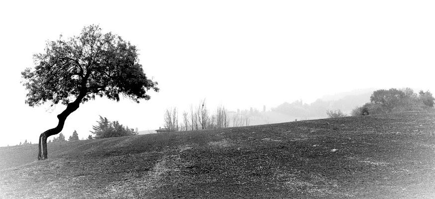 Evanescence... di Francesca Malavasi
