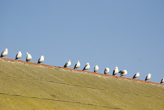 Photo: Birds on the roof