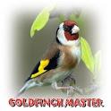 Goldfinch Master Mp3 icon