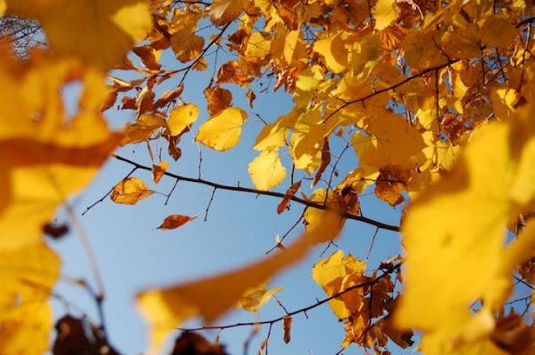 Falling leafs di nizu