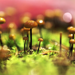 by Rod Fewer - Nature Up Close Mushrooms & Fungi ( mushroom, macro, fungi, nature, wide open )