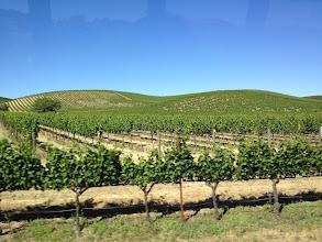 Photo: Wine country