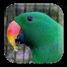 com.kikaapps.parrotsounds.birdsounds