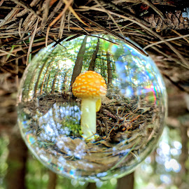 Crystal Ball Mushroom by Jeff McVoy - Nature Up Close Mushrooms & Fungi ( ball, sphere, fungi, nature, lensball, crystal, woods, mushroom )