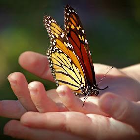 by Katie McKinney - Babies & Children Hands & Feet ( child, butterfly, macro, butterflies, monarch,  )