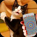 Cat Hypnosis Illusion Joke icon