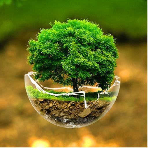 自然树壁纸 娛樂 App LOGO-APP開箱王