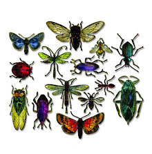 Tim Holtz Sizzix Framelits Die Set 14/Pkg - Entomology