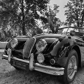 Vintage Luxury Car by Marco Bertamé - Black & White Objects & Still Life ( car, luxury, jaguar, xk, british, vintage, elegant, chrome, round, oldtimer, curved, 140,  )