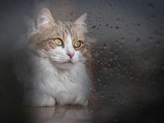 rainy days di carcat