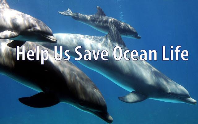 OCG - Saving Ocean Life