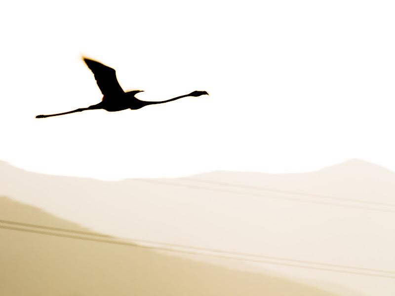 Libertà e leggerezza al tramonto di marco_lino