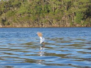 Photo: Bizarre channel marker in the Melaleuca lagoon