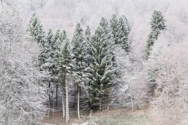 gli ultimi residui colori del bosco di christian_taliani