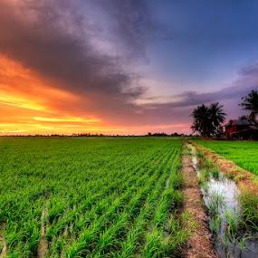 Serenity in Fiery Sky by SyaFiq Sha'Rani - Landscapes Prairies, Meadows & Fields ( village, sunset, fiery sky, paddy fields, house, landscape )
