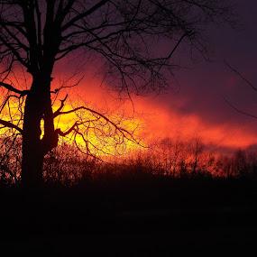 Gods paintbrush by Carol Keskitalo - Novices Only Landscapes ( sunset, trees, landscape, skyline. clouds )