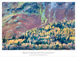 Photo: Autumn Larch Trees and the Slopes of Catbells  Here's another from the Lakes taken from the Surprise View in Ashness Woods overlooking Derwentwater near Grange.  Canon EOS 5D MkII,EF70-200mm f/4L USM at 200mm, ISO 100, 1s at f32