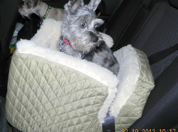 Next, strap the car seat in with the seat belt. Then, place your dog...