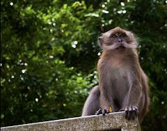 Visiter La Réserve Bukit Timah