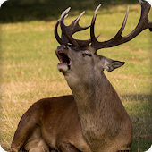 Deer Sounds Ringtone Android APK Download Free By BCS Developer