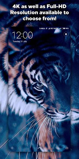 4K Wallpapers - Auto Wallpaper Changer 1.1.5 screenshots 7