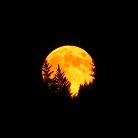 Last of Three Super Moons, the  by Sherry Gardner - Landscapes Starscapes