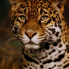 Seeing Spots by Julie Anderson - Animals Other Mammals (  )