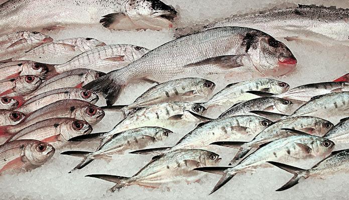 La costellazione dei pesci di Aldo Rizzardi