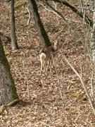 DeerBush