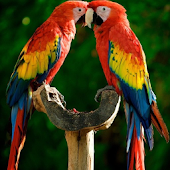 Macaw Parrot Bird HD Wallpaper