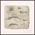 史前水生生物化石