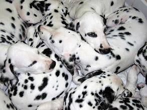 Photo: Lots of Spots