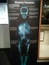 Photo: Mummy Forensics