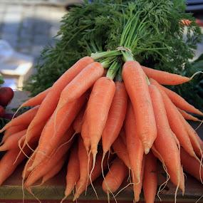 bundle of carrots by Joseph Escopin - Food & Drink Fruits & Vegetables ( fresh vegetable, pwcfruit, carrots, valencia, pwcvegetables, bundle of carrots )