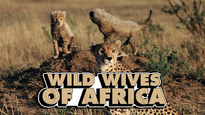 Wild Wives of Africa thumbnail