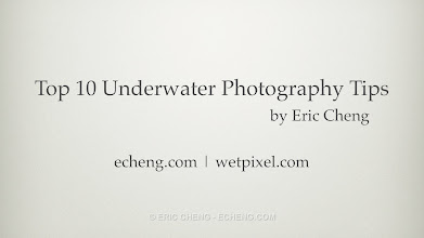 Photo: Thank you. See more pictures here: If you're here looking for an album of underwater pictures, I've put some up on Google+: https://plus.google.com/photos/107004843925454095805/albums/5650816419664107921