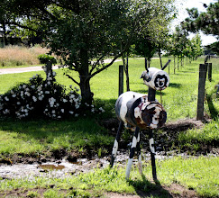 Photo: Year 2 Day 158 - Another Cow Outside a House