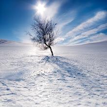 Photo: The last tree