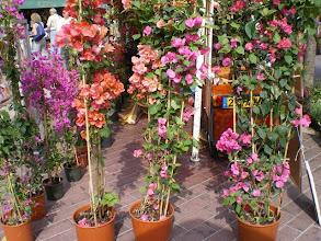 Photo: The Flower Market