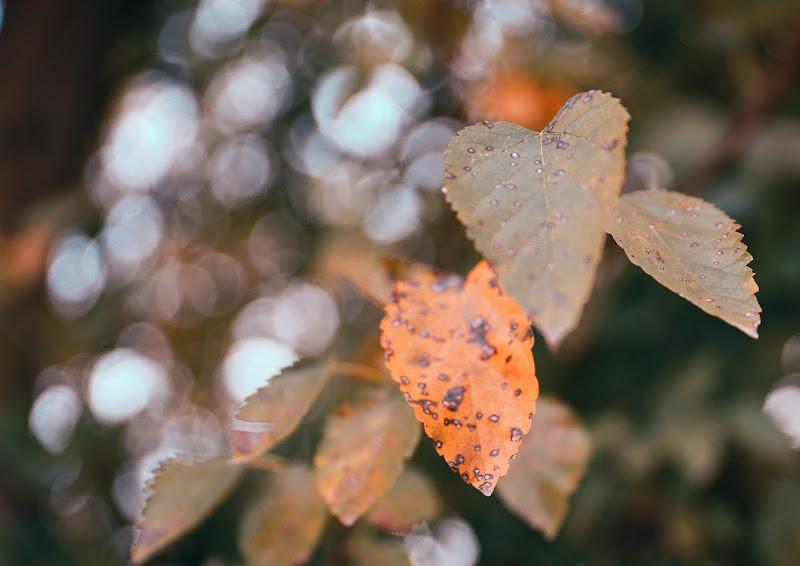 Leaves di rakonline