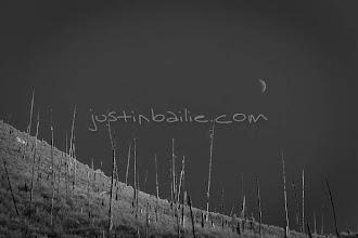 Photo: Scenic image of burnt trees on mountainside. Salmon River, Idaho.